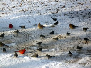 170214_birds